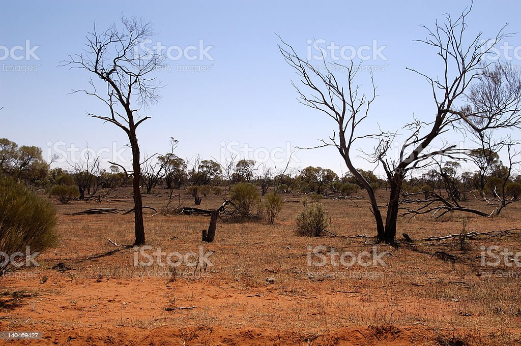 Outback Bush stock photo