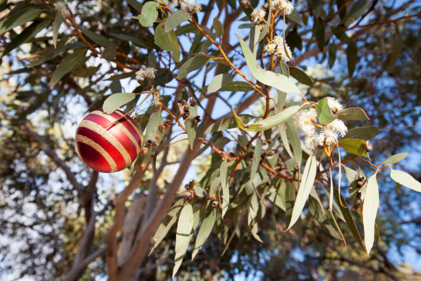 Outback Christmas Scene Australia Red and gold Christmas bauble hanging in a gum tree in Australia australian culture stock pictures, royalty-free photos & images