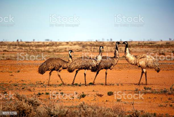 Photo of Outback Emus