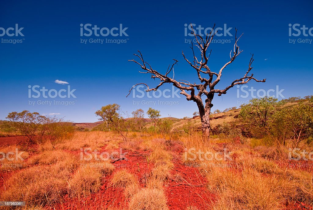 Outback Western Australia - Tree in Karijini National Park royalty-free stock photo