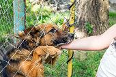 istock Outddor Homeless animal shelter. Sad mongrel dog happy visitor shelter. Girl choosing a dog for adoption. Girl volunteer in the nursery for dogs. Shelter for stray dogs. 1056373446