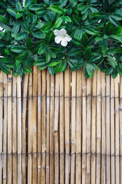 Outdoor Bamboo Fencing and Plants stock photo