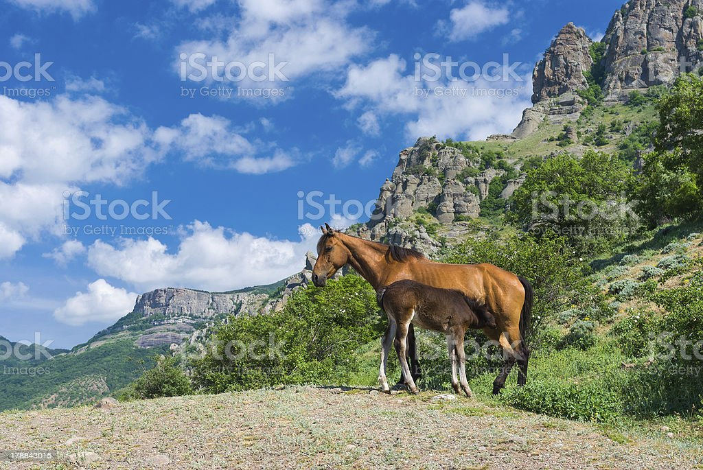 Super Outdoor Breakfast Stock Photo More Pictures Of Animal Istock Beutiful Home Inspiration Aditmahrainfo