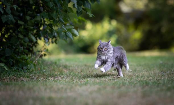 Outdoor cats picture id1163715438?b=1&k=6&m=1163715438&s=612x612&w=0&h=c0ud7bhmwrkojr0lwuygdcgjgroflcyce22hem7 mym=