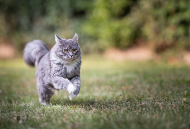 Outdoor cats picture id1163715488?b=1&k=6&m=1163715488&s=612x612&w=0&h=kudkqy yigcm34eos49a3xztaax0juee0mvz w 2i60=