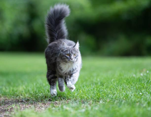 Outdoor cats picture id1163715574?b=1&k=6&m=1163715574&s=612x612&w=0&h=fwneedzuw9jauh ikybu1yoyiygb4u863malpbzcj9a=