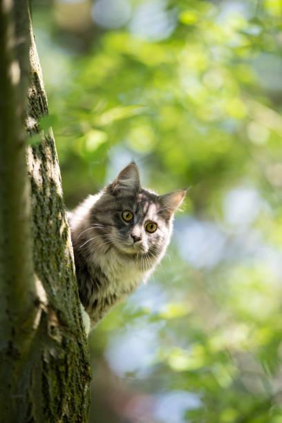 Outdoor cats picture id1163716144?b=1&k=6&m=1163716144&s=612x612&w=0&h=orf3uwepfuwhxciyqqnhahq2t8ket5idlxcpjneezwo=