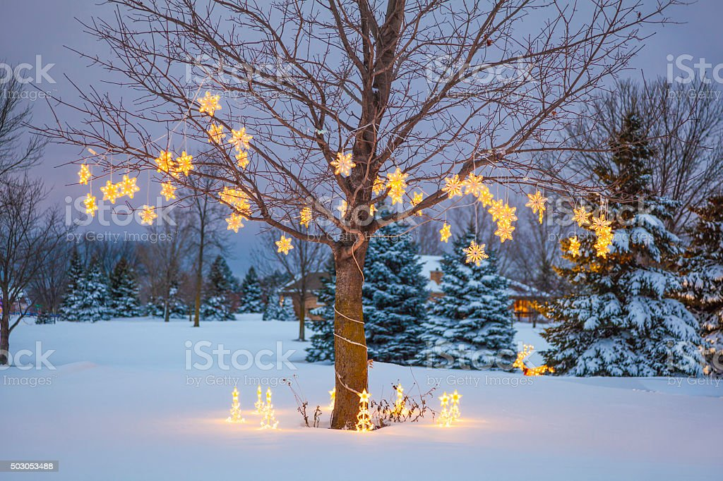 outdoor christmas holiday lights stars in tree royalty free stock photo - Outdoor Christmas Lights Stars