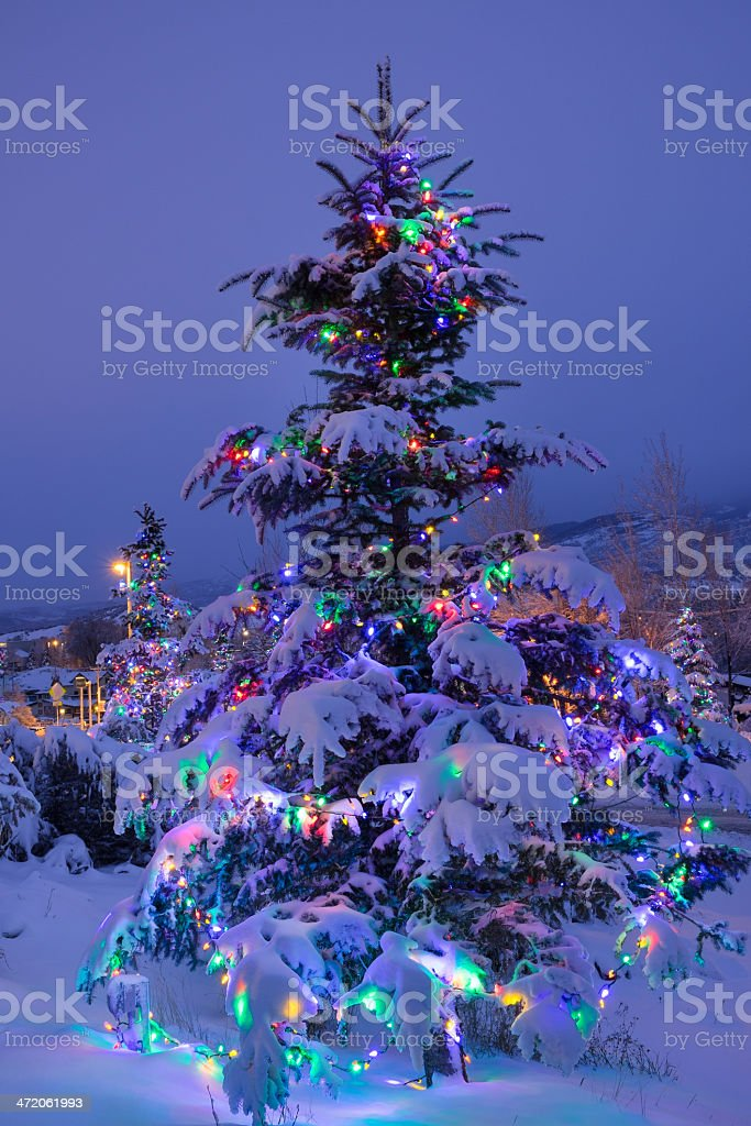 Outdoor Christmas Tree With Lights And Fresh Winter Snow Stock Photo