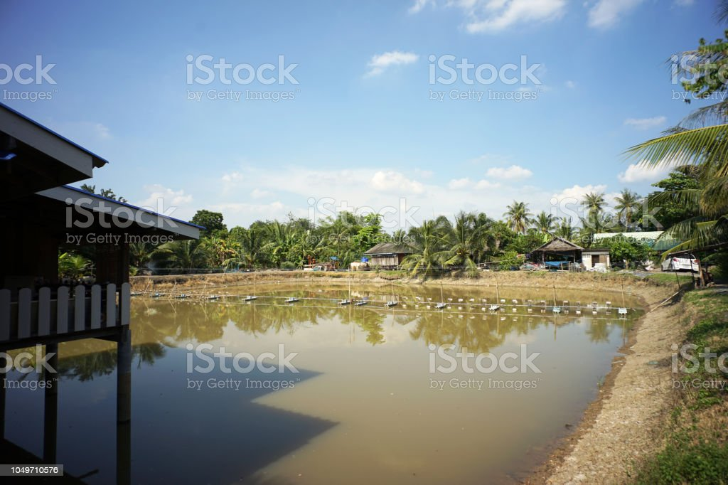 Outdoor fish or shrimp farming with farm water aeration system stock photo