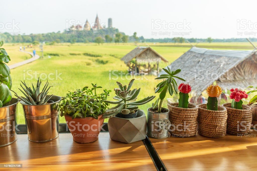 Outdoor flower pots with tropical succulent plants stock photo