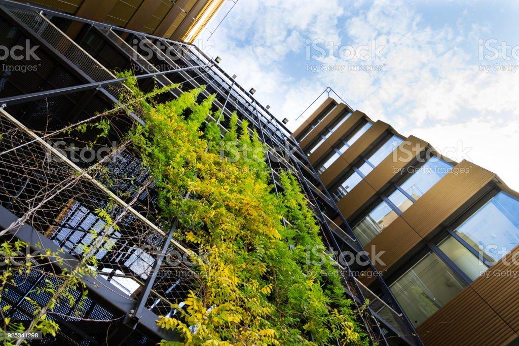 Leben im freien grünen Wand, vertikalen Garten auf modernes Bürogebäude – Foto