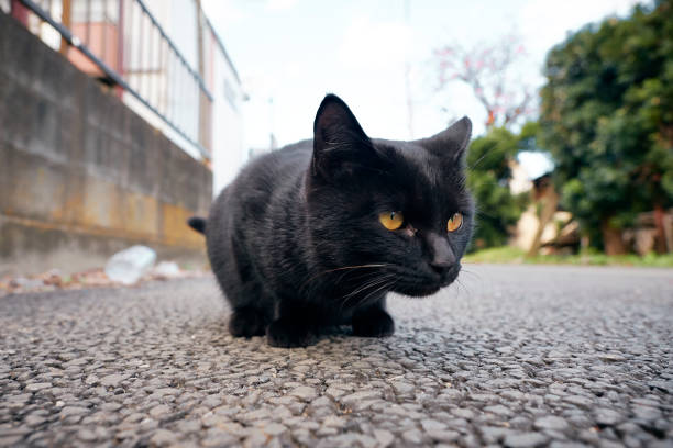 Outdoor japanese cat picture id939453198?b=1&k=6&m=939453198&s=612x612&w=0&h=kxu0rduezc3dezdekuf81qju povafjm7zk2h6tgnme=
