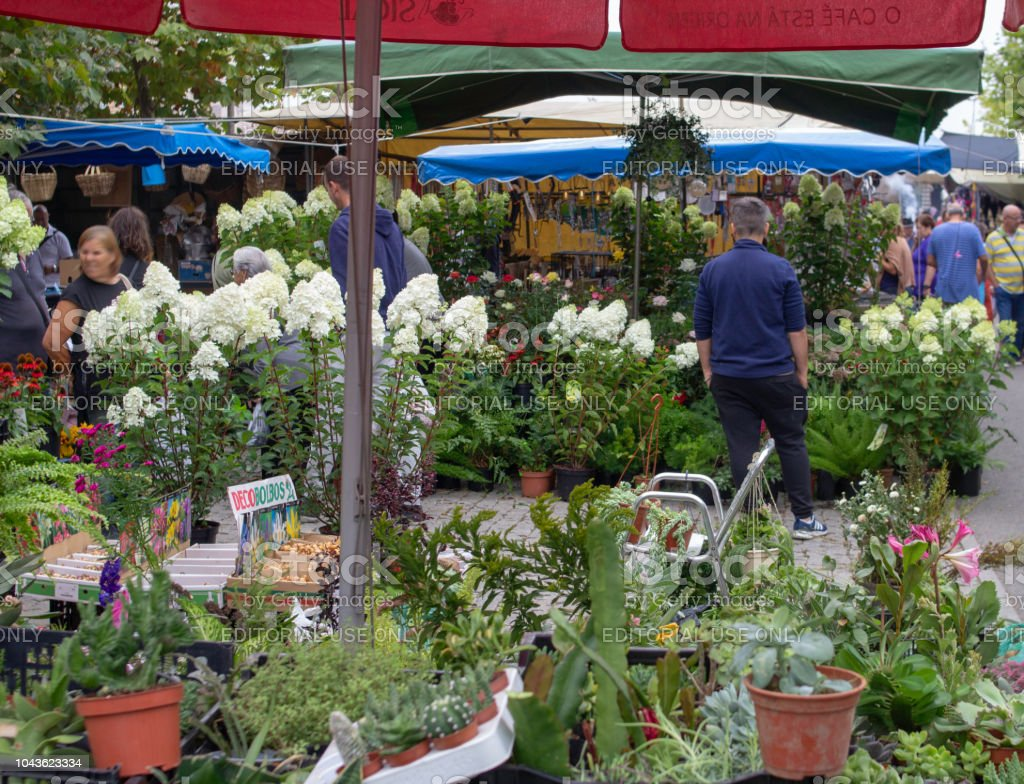 Horticultural plants,flowers,vegetables,cacti etc for sale at an...