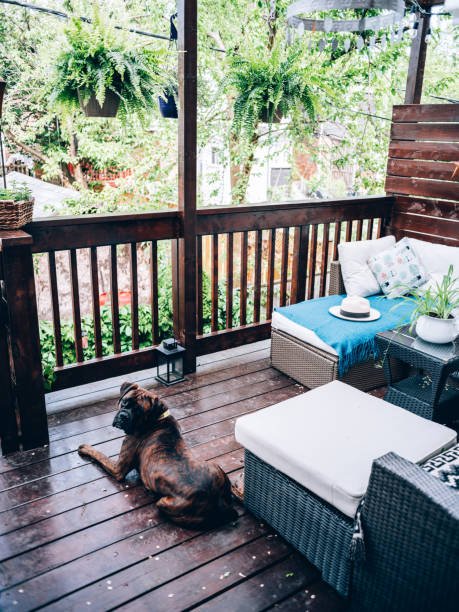 Outdoor patio deck in summer with dog Outdoor patio deck in private North American townhouse. Family's Boxer dog resting on the patio. dog on wooden porch stock pictures, royalty-free photos & images