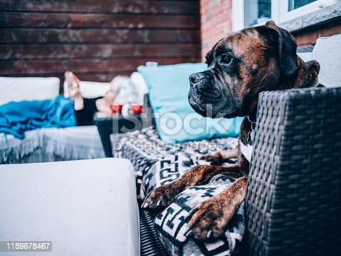Outdoor patio deck in private North American townhouse. Family's Boxer dog resting on the patio. Unrecognizable woman resting on the outdoor sofa.