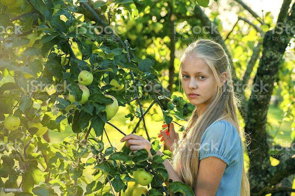 야외 세로는 아름다운 너무해 여자아이 끼칠 수 있는 사과나무 트리 royalty-free 스톡 사진