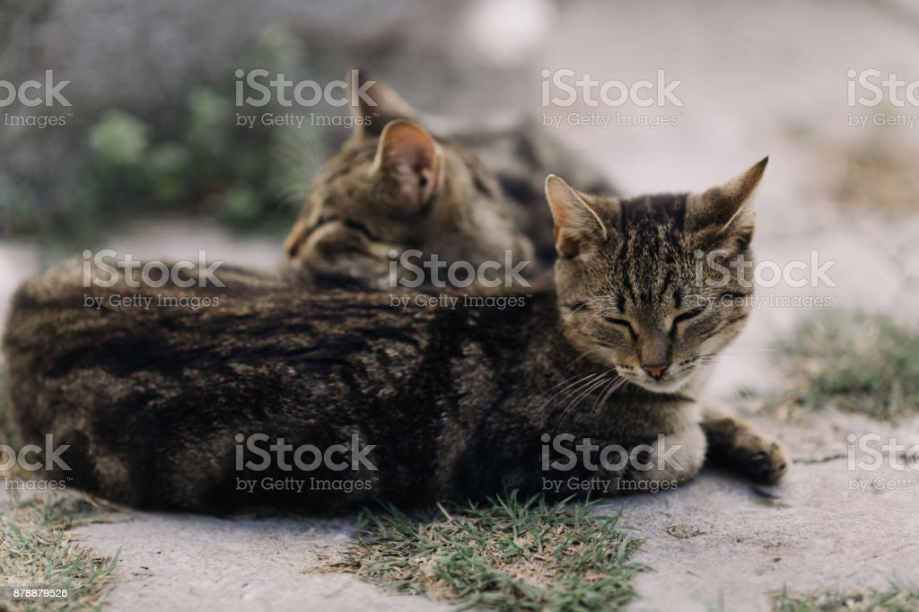 Outdoor resting cats stock photo