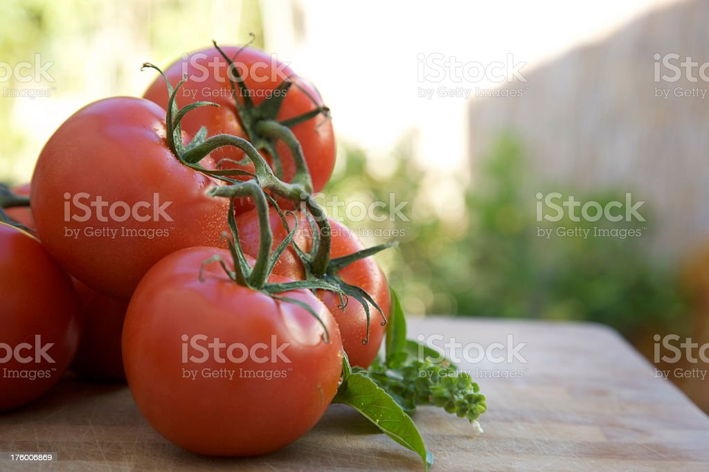 Outdoor Tomatoes and Basil stock photo