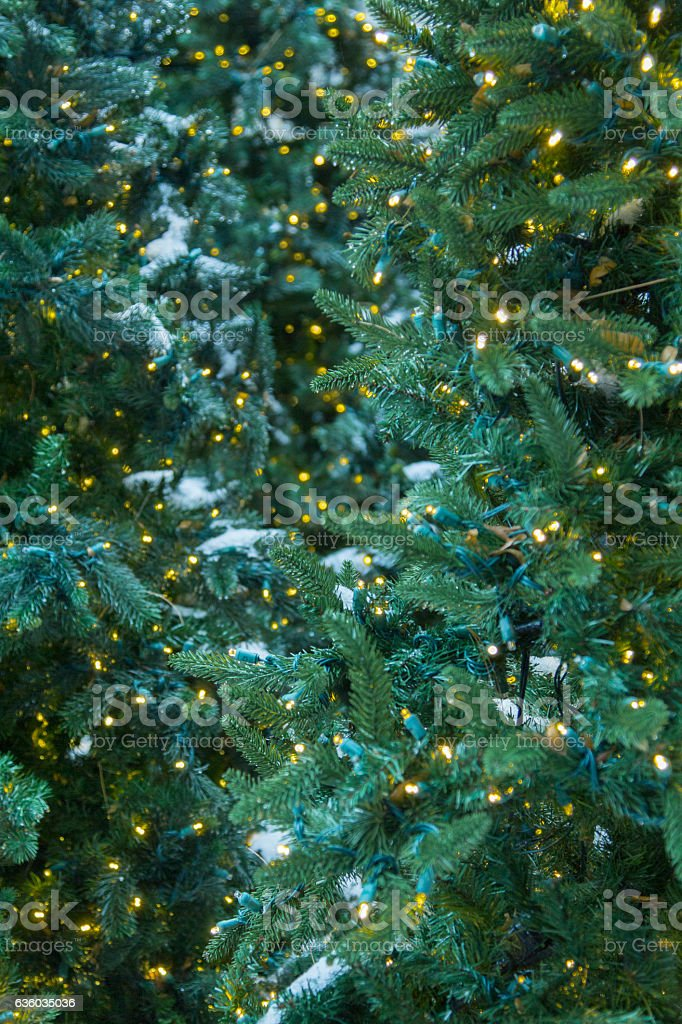 Outdoor Tree With Christmas Lights and Snow stock photo