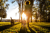 istock Outdoor with dogs in the nature by a lake, Canada 622543690
