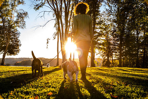 Outdoor with dogs in the nature by a lake, Canada stock photo