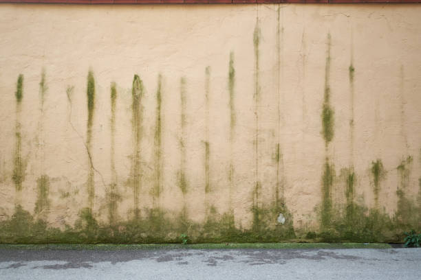 outdoors boundary wall with mould marks stock photo