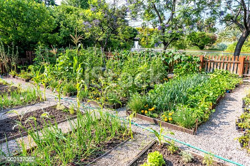 Horizontal color image of organic vegetable garden.