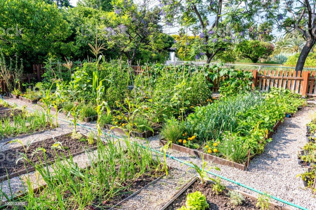 Im freien Gemüsegarten – Foto