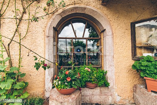 outdoors view of old window with plant decoration exterior