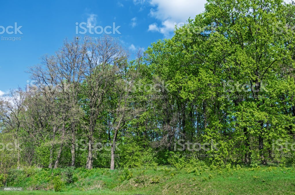 Outer wood stock photo