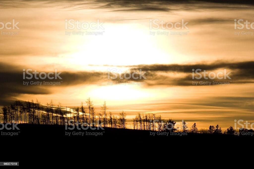 Sagoma di alberi contro il tramonto foto stock royalty-free