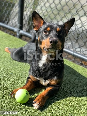 Playful pictures of dogs