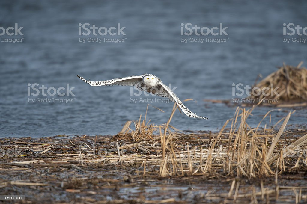 Outstretch Wings royalty-free stock photo