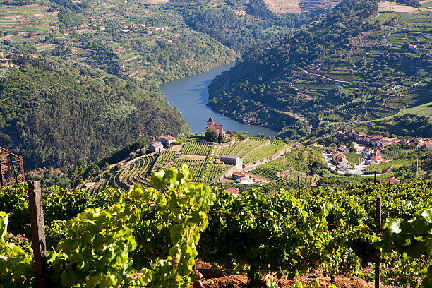 Over head view of Douro valley Landscape in Douro Valley, Portugal duero stock pictures, royalty-free photos & images