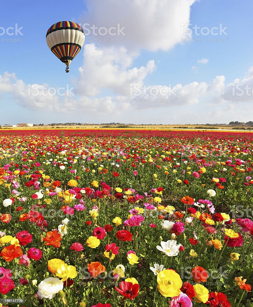 Over the blossoming flowers of flying a balloon royalty-free stock photo