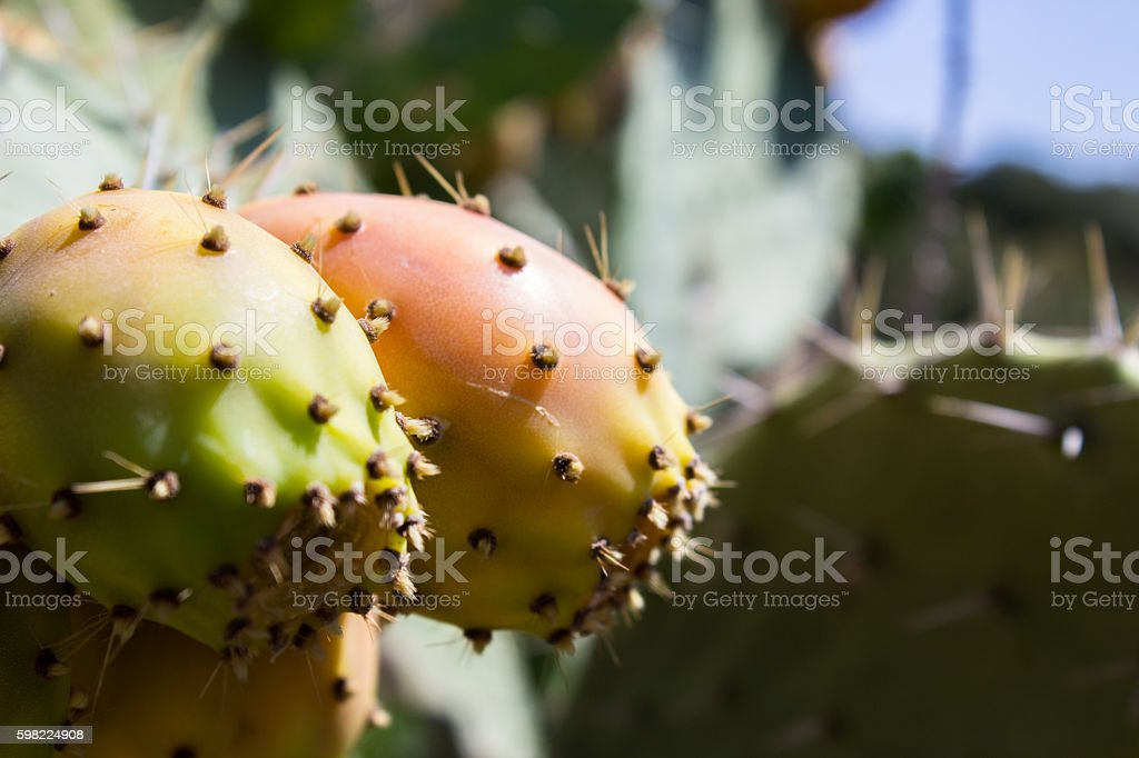 over the spikes under the sweet and succulent fruit foto royalty-free