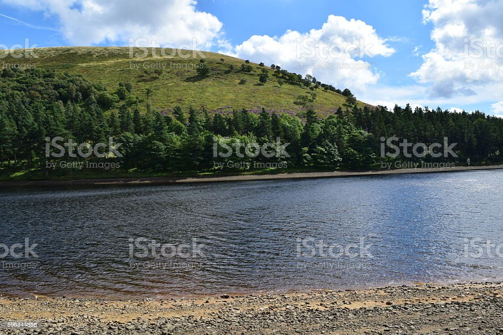 Over the water to a tree-lined bank royalty-free stock photo