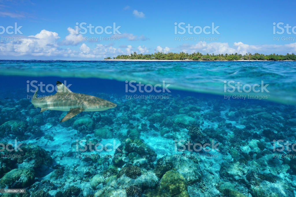Over Under Island And Shark Underwater Rangiroa Stock Photo Download Image Now Istock