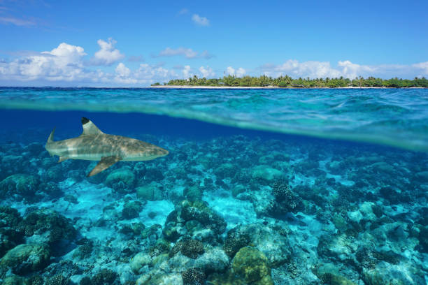 over under island and shark underwater rangiroa - pacific islands stock pictures, royalty-free photos & images