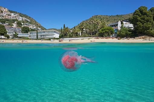 Over under sea beach jellyfish underwater Spain
