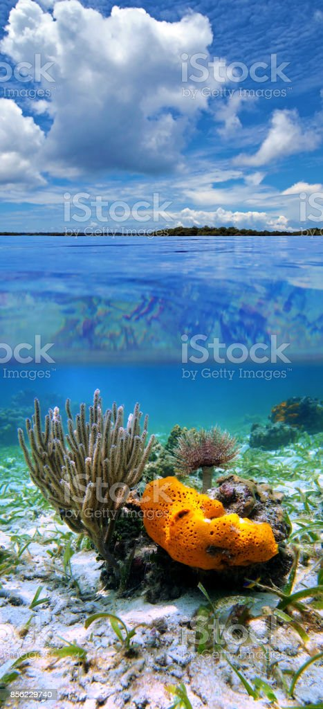 Over under sea life and cloudy bkue sky stock photo