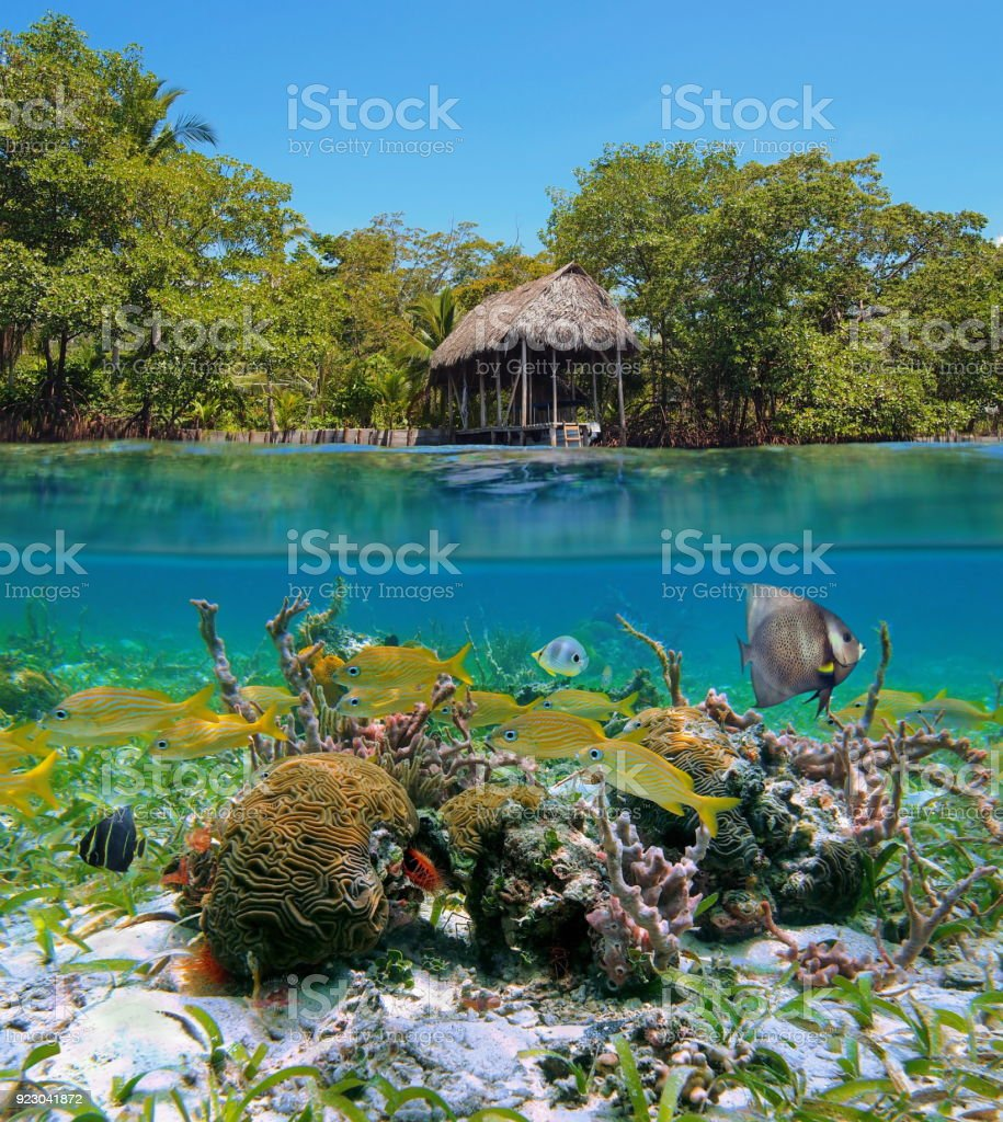 Over under sea tropical fishes corals Caribbean stock photo