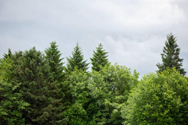 Overcast Day on Haida Gwaii stock photo
