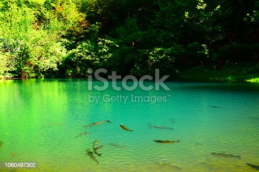 The cloudy landscape of the lake, a beautiful reflection of the forest in which the fish are seen