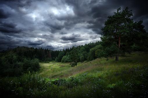 Overcast sky over forest