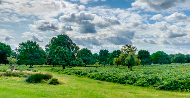 overcast sky - richmond park stock photos and pictures