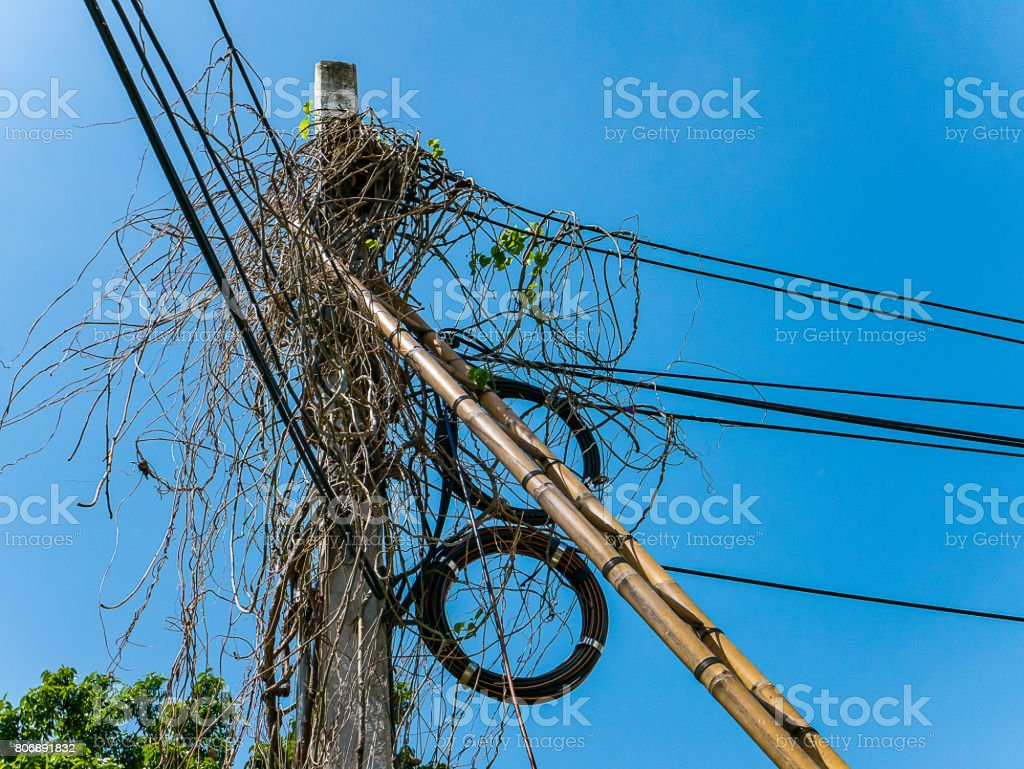 Overgrown Electric Power Pole With Insulators And Cable
