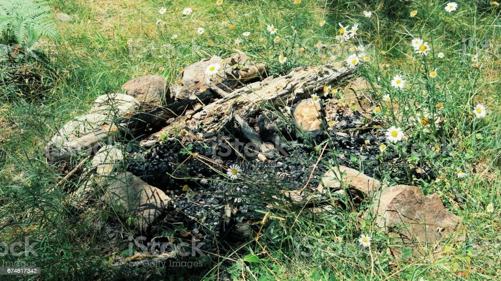 Overgrown Fire Pit Charcol Burned Wood Daisies Grass Growing Stock Photo Download Image Now Istock
