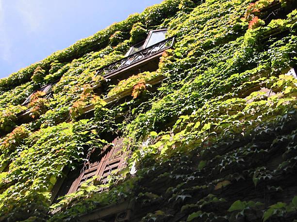 overgrown house - fsachs78 stockfoto's en -beelden
